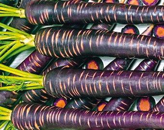 SALE Purple Haze Carrot Organic Non GMO 50+ Seeds #1142
