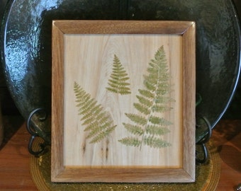 Framed pressed ferns made with upcycled wood