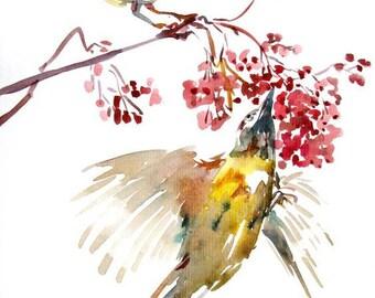 Bird painting,Bird watercolour,Bird drawing, Flower and bird painting