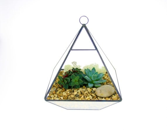 Pyramid Terrarium Kit
