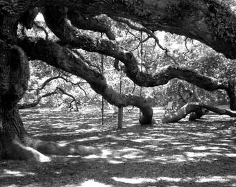 Angel Oak Digital Art Print; Nature art print; black and white art; modern minimalist art; travel photography; wall art; south carolina art