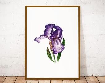 Botanical print, Iris flower botanical art print, botanical paintings, kitchen illustration, purple flower wall decor, nursery floral poster