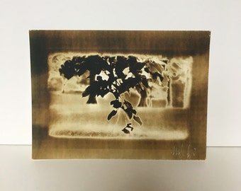 Note card:Tree Branch