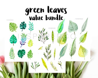 VALUE BUNDLE Green Leaves - Bullet Journal Stickers - Planner Stickers - Decorative Stickers - WTL001, WL004, WL001