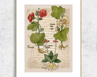 Vintage botanical prints, botanical printable, botanical illustration, antique botanical prints, insect art, botanical poster, art collage