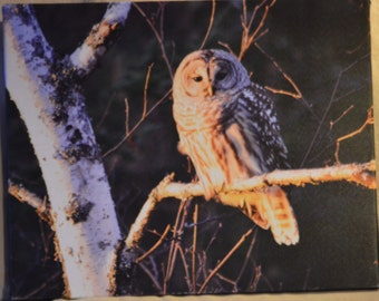 16x20 Owl photo canvas print