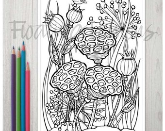 Printable Sociable Seed Pods Colouring Page