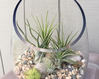 Glass Terrarium with Air Plants, KIT to make terrarium, DIY kit to make your own terrarium, air plants, terrarium