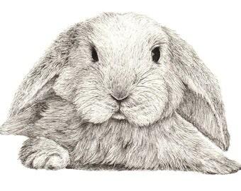 A Bunny - (print)