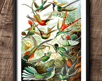 Hummingbirds · 8x10 · Instant Download · Birds · Wall · Printable · Digital File #47