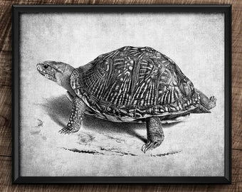 Turtle · 10x8 · Instant Download · Vintage · Animals · Wall · Printable · Digital File #70