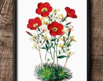 Red flower · Instant Download · Botanical · Vintage · Wall · Printable · Digital File #111
