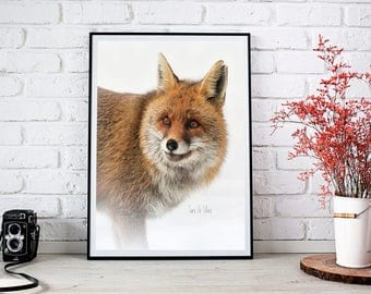 Fox, fine art photography, photo print, wildlife photography