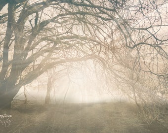 Misty foggy woodland print, mysterious, fantasy art photography, dream photography, fairy-tale, romantic, ethereal, surreal, light, forest
