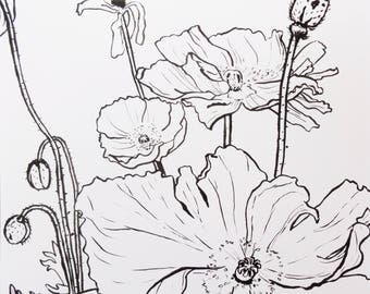 Drawing hand-drawn on paper A3, ink and brush, Iceland Poppies, ORIGINAL