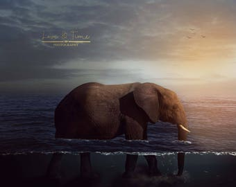 Elephant in the Sea Digital backdrop / background