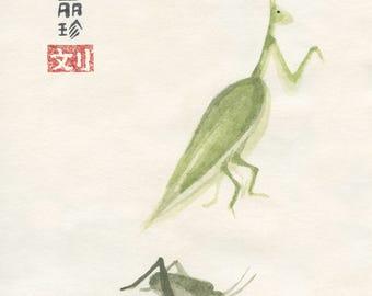 Praying mantis and cricket