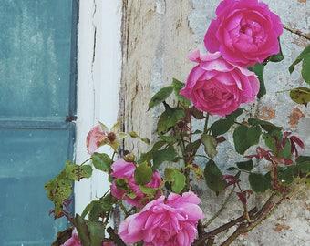 Antique Rose - Blank Greetings Card