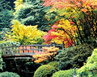 Portland Japanese Garden Available as Canvas Panels or Fine Art Matted Prints