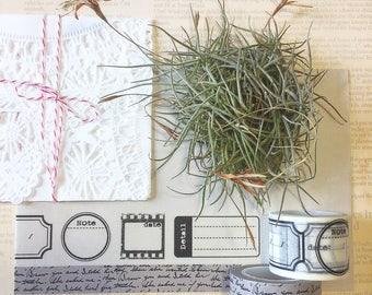 Label Washi Tape • Script Writing Washi Tape