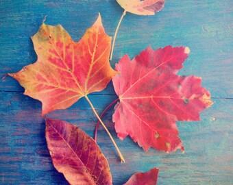 Leaf Photograph - Autumn Photograph - Still Life - Nature Photography - Blue Red Orange - Farmhouse Decor - Fall Color - Wall Art -Leaf Art