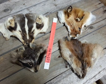 4 B Quality Faces-  Fox, Badger, Raccoon, Muskrat Soft Tanned Lot No. 03346HO