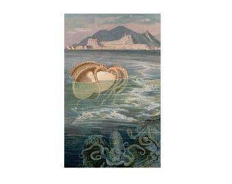 1890 OCTOPUS LITHOGRAPH - paper nautilus lithograph - original antique print - ocean sea life - octopus argonaut - cephalopod mollusk