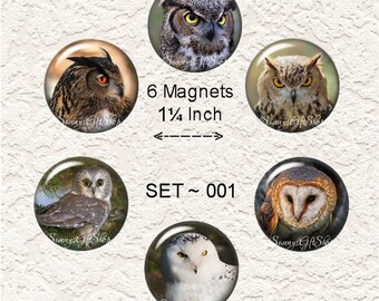 "Owl Magnets Sets Choose From 5 Different Owl Prints 1.25"" in Size Buy 3 Sets Get 1 Set Free 6-023"