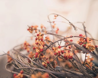 bittersweet -fall photography - autumn decor - autumn photo - bittersweet photo - Original fine art photography prints - FREE Shipping