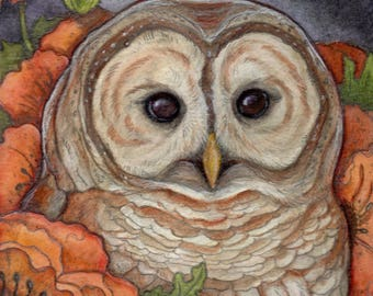 Barred Owl and Poppies