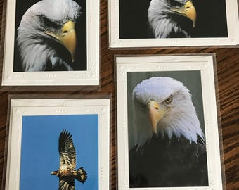 Photo cards, 4 cards with envelopes. The subject is Eagles.