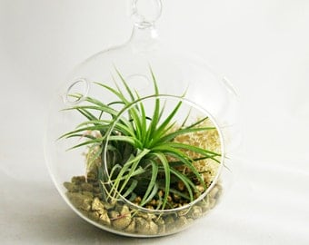 Design Your Own Mini Air Plant Terrarium / Your Choice of Colors