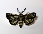 Death's head moth pin
