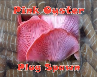 Pink Oyster Mushroom Plug Spawn (G1) 100 Count Log Cultivation Very Aggressive