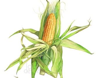 corn print, corn painting, ear of corn print, corn watercolor, C15416 A3 size print, vegetable watercolor, vegetable painting, vegetable art