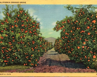 California, Orange Grove - Linen Postcard - Postcard - Unused (G1)