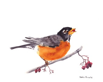Robin Eating Berry Print of Watercolor Painting, animal,bird art, wildlife,nature,bird lover,American Robin,  berry, robin, made in ohio