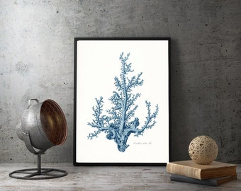 Coastal Decor Antique Pacific Sea Coral Giclee Art Print 8x10 Coastal Blue