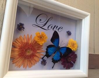 Custom Butterfly Shadowbox - Butterfly Framed Art, Housewarming Gift, Wedding Gift, Butterfly Decor, Framed Butterfly, Real Butterfly