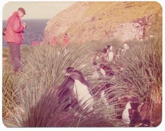 Antarctic Ocean Penguins color vintage photo photography social realism found snapshot Lindblad Expedition