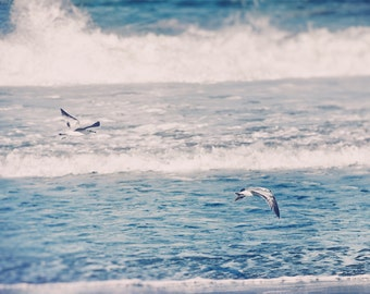 Beach Photography, Ocean Print, Sea Gull Image, Bird in Flight, Coastal Art