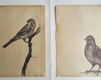 Starling and Wagtail Original Biro Drawing on Vintage Book Paper