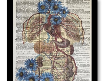 Dictioanry Page Art, Anatomical Body, Internal Organs, Anatomical Blue Red Floral Print, Anatomical, Anatomy Pictures,Vintage Anatomical Art