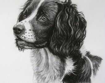 Springer Spaniel gun dog dog art dog gift dog print fine art Limited Edition print from an original charcoal drawing by H Irvine