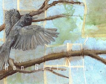 Black Phoebe Female, Phoebe Painting, Bird Art Print, Bird Painting, Wildlife Painting, Flycatcher Painting, E LINTON art  Bird illustration