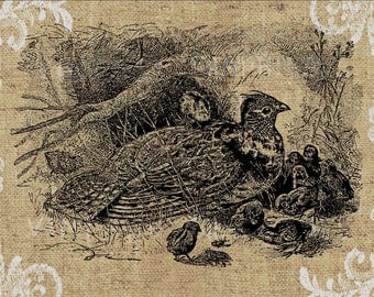 Vintage quail family printable graphic Digital download image  for iron on fabric transfer, burlap, decoupage, tote bags, pillows No. 803