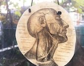 Sun Catcher with 19th Century Antique Medical Illustration - Vintage Science - Gifts Under 20 - Dissection