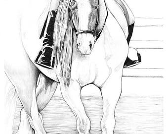 Hi~Point ~ Gypsy Vanner ~ Horse Art