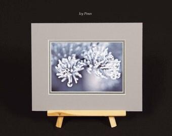 Photo - Icy Pines