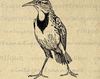 Printable Antique Bird Digital Download Animal Image Graphic Jpg Png Eps Print 300dpi No.256